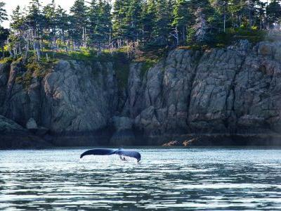 On the tail: Whale watching on the Bay of Fundy, Canada