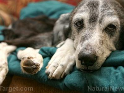 A guide to treating dog thyroid problems with natural medicine