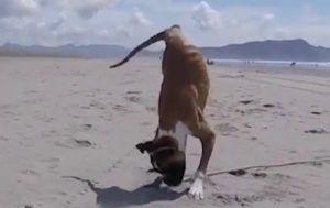 This Dog May Be Missing 2 Legs, But His Spirit Is Unbreakable