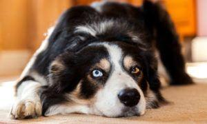 3 Amazing Ways To Honor A Border Collie Who Passed Away