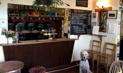 Top 5 Dog-Friendly Pubs in Southampton