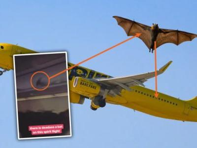 There Was A Freaking Bat Flying Around Inside A Spirit Airlines Flight