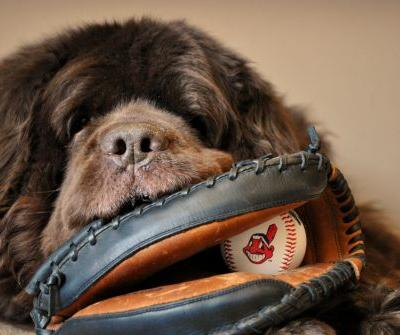 Dog Friendly Baseball Games - 2018 Schedule