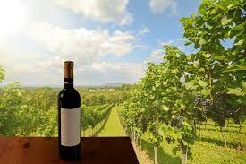 Pune to be developed for wine tourism