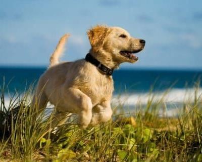 Keeping Your Dog Safe At The Beach