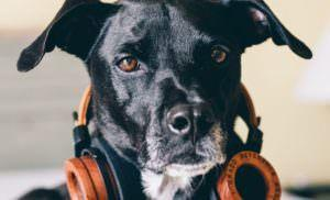 Study Shows That Dogs Prefer Certain Genres Of Music