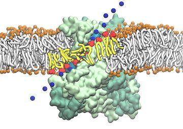 The Machinery for Phospholipid Scrambling