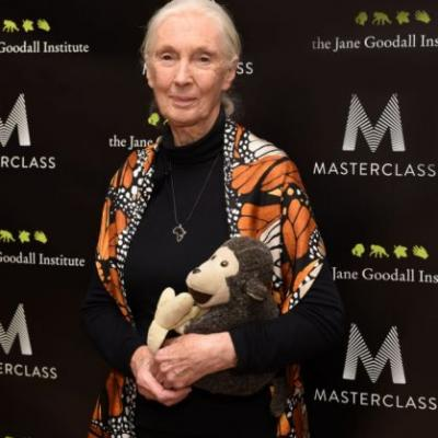 Dr. Jane Goodall, Animal Lover and Activist, Teaches First Online Classes