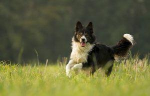 The Top 10 Fastest Dog Breeds