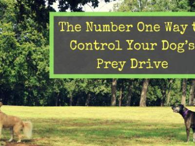 The Number One Way to Control Your Dog's Prey Drive
