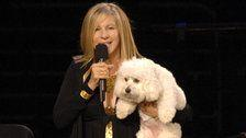 Barbra Streisand Had Her Dog, Samantha, Cloned Twice