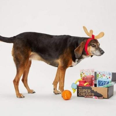 What Are the Best Christmas Gifts for a Super Chewer Dog?