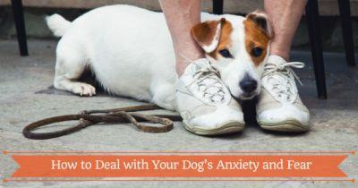 How to Deal with Your Dog's Anxiety and Fear