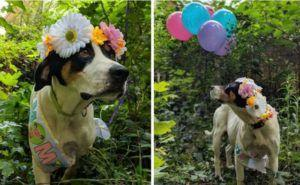 Pregnant Foster Dog Is Treated To A Beautiful Maternity Photo Shoot