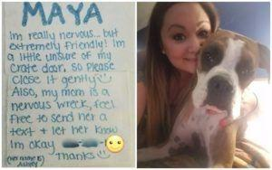 United Employee Lets This Dog Mom Know Her Baby Is In Good Hands