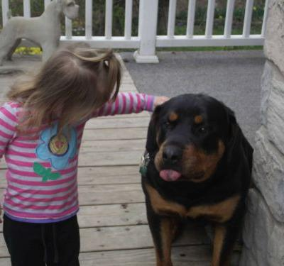 How Can You Train A Bully Rottweiler To Respect Your Small Child?
