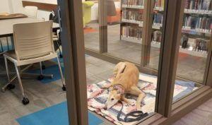 Lonely Dog Finally Gets His Wish After His Photos Go Viral