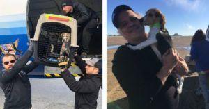 You Helped Bobo & His Friends Fly From A High Risk Shelter To Their Forever Homes