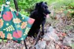 Are You Ready for Fall Dog Walks? GIVEAWAY