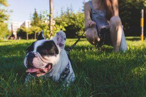 10 Dog Breeds That Are Social Butterflies