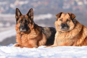 4 Tips To Help Your Senior Dog This Winter