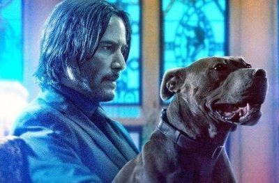 John Wick 3 Celebrates National Puppy Day with a Heartwarming