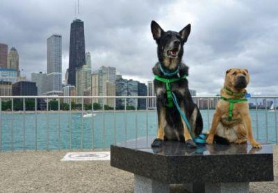 Illinois' Top Pet Friendly Attraction: Chicago Lakefront Trail & Navy Pier