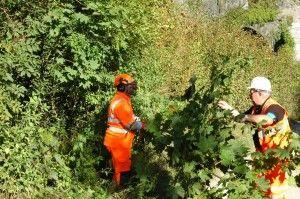 Drop-In Event To Present Vegetation Management Plans In Cheshire