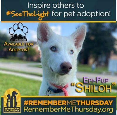 RememberMeThursday: SeeTheLight and Adopt an Epi-dog!