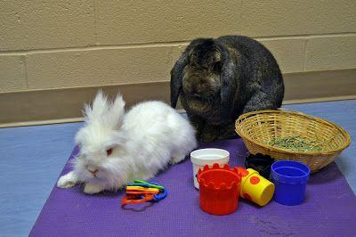 Bonded Pairs: The Importance of Bunny Relationships