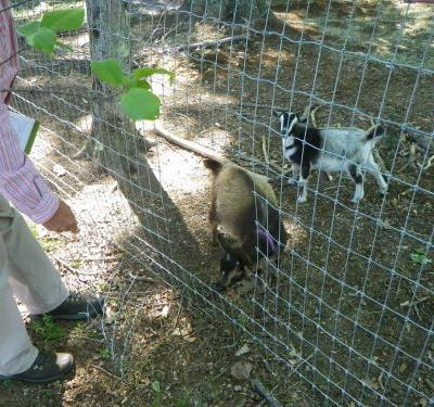 Goat killing may have been part of satanic ritual, police say
