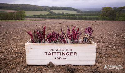 If Only Grapes Grew Faster: Domaine Evremond by Taittinger