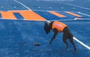 Nobody Loves Their Job More Than Kohl, Boise State University's Tee Dog