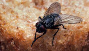 Of Flies, Coins and Nails - Things not to put in your Stomach