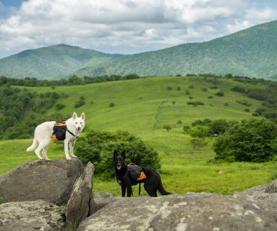 ​5 Things To Know Before Hiking With Your Dog