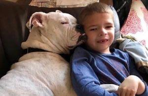 Nonverbal 6-Year-Old Finds A Best Friend In A Deaf Dog