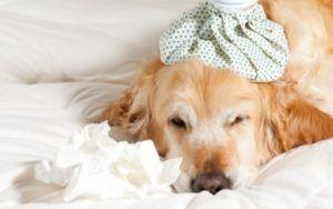 9 Reasons Your Dog May Be Vomiting