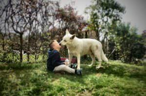 Genetic Syndrome In Humans May Help Explain Friendliness In Dogs
