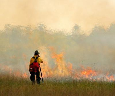 From Smoky Skies to a Green Horizon: Scientists Convert Fire-Risk Wood into Biofuel