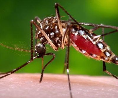 Using Biotechnology to Tackle Deadly Mosquito-Borne Illnesses
