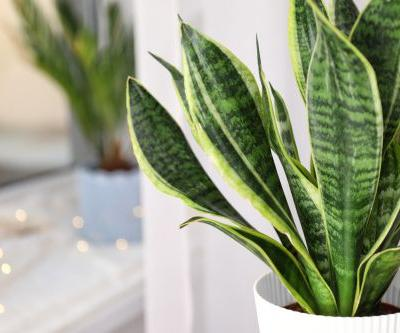 Top 5 Indoor Plants to Detox Your Home
