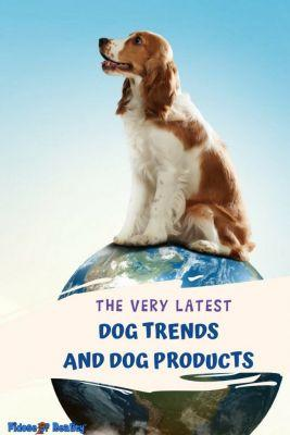 Latest Dog Trends in the Pet Industry