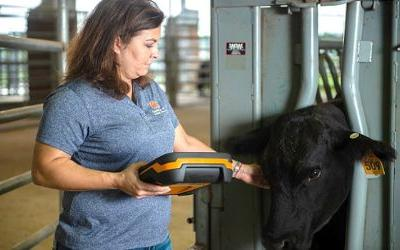Auburn researchers find food safety gaps at 'local' farms