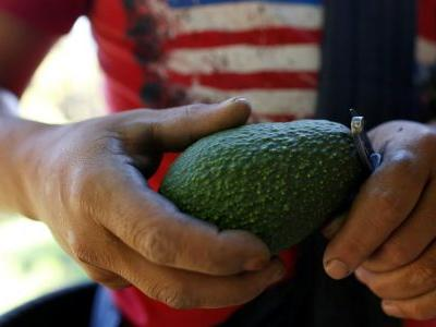 So how'd those avocados handle the searing heatwave?