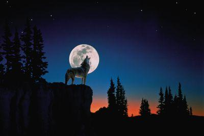 What does the full wolf moon mean for us? We ask an astrology expert