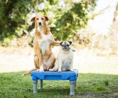 Wondering How to Teach a Dog Tricks? Our Step-by-Step Guides