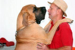 A Super Unique Father's Day Gift Idea for the Dog Dad in Your Life
