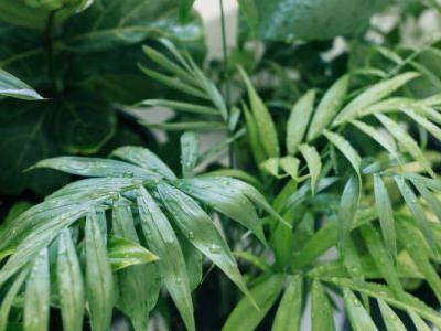 How To Help Your Houseplant Water Itself