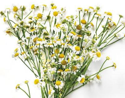 Ingredient Spotlight: Chamomile