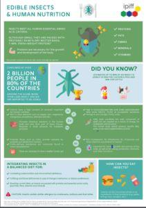 Eating insects: everything you want to know and more